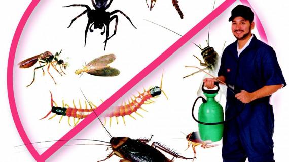 Απολυμάνσεις και μυοκτονίες: Κρατήστε τον χώρο σας καθαρό από μικρόβια και ποντίκια