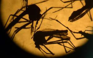 zika-virus-china