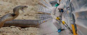 Απολύμανση για φίδια